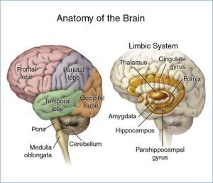 brain_headborder